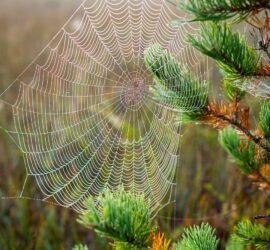 Netzwerksymbol Spinnennetz